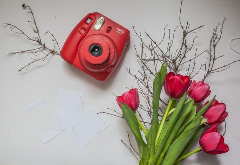 Instax rot mit Tulpen
