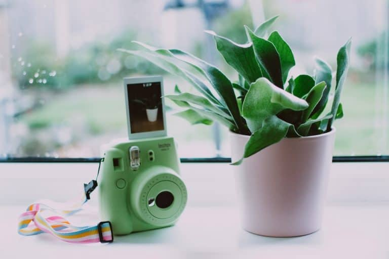 Instax neben Pflanze